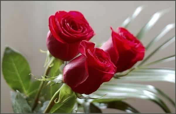 shop hoa tuoi quan 8 - dat hoa tuoi quan 8